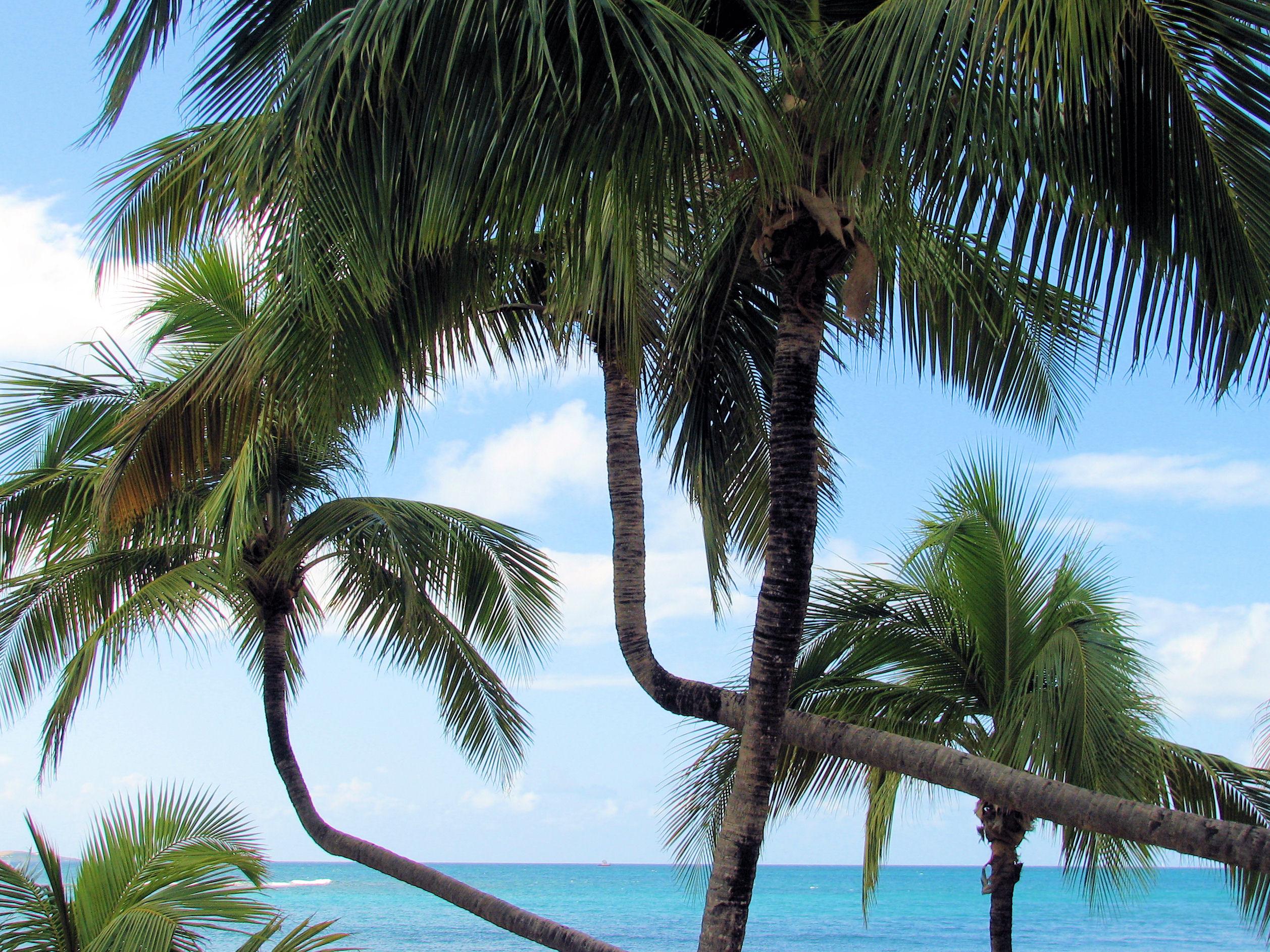 016 Palms